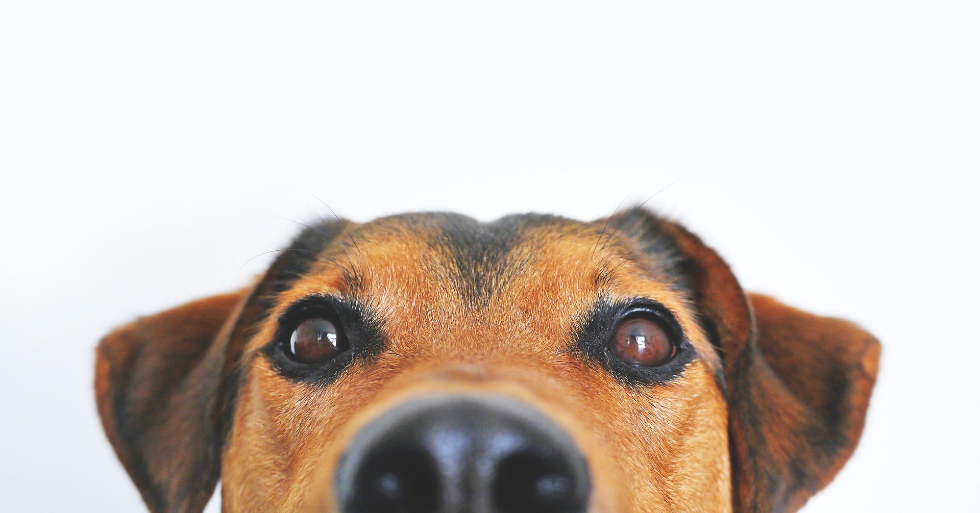 come si calcola l'età del cane formula da considerare
