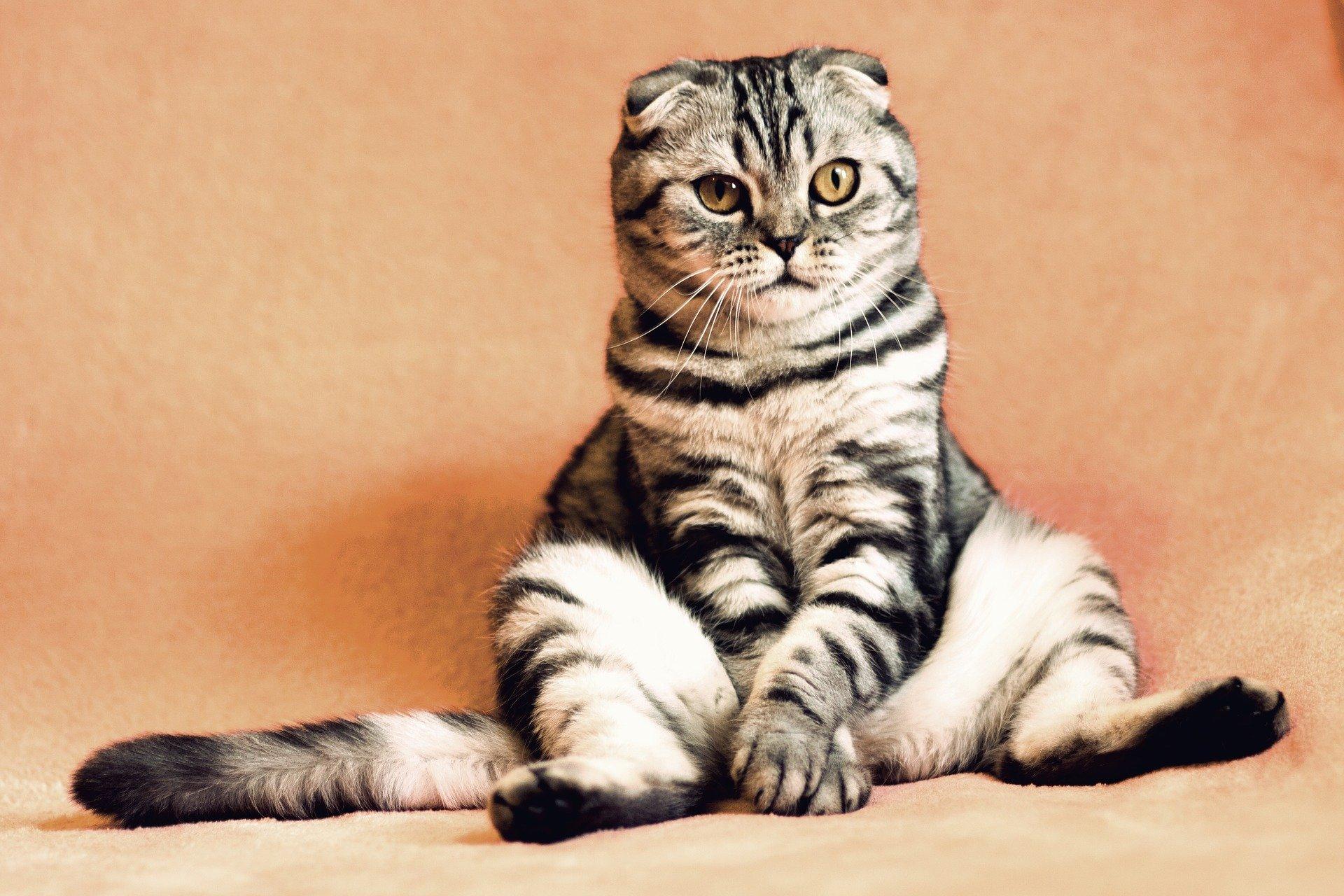 oggetti utili da acquistare se si ha un gatto