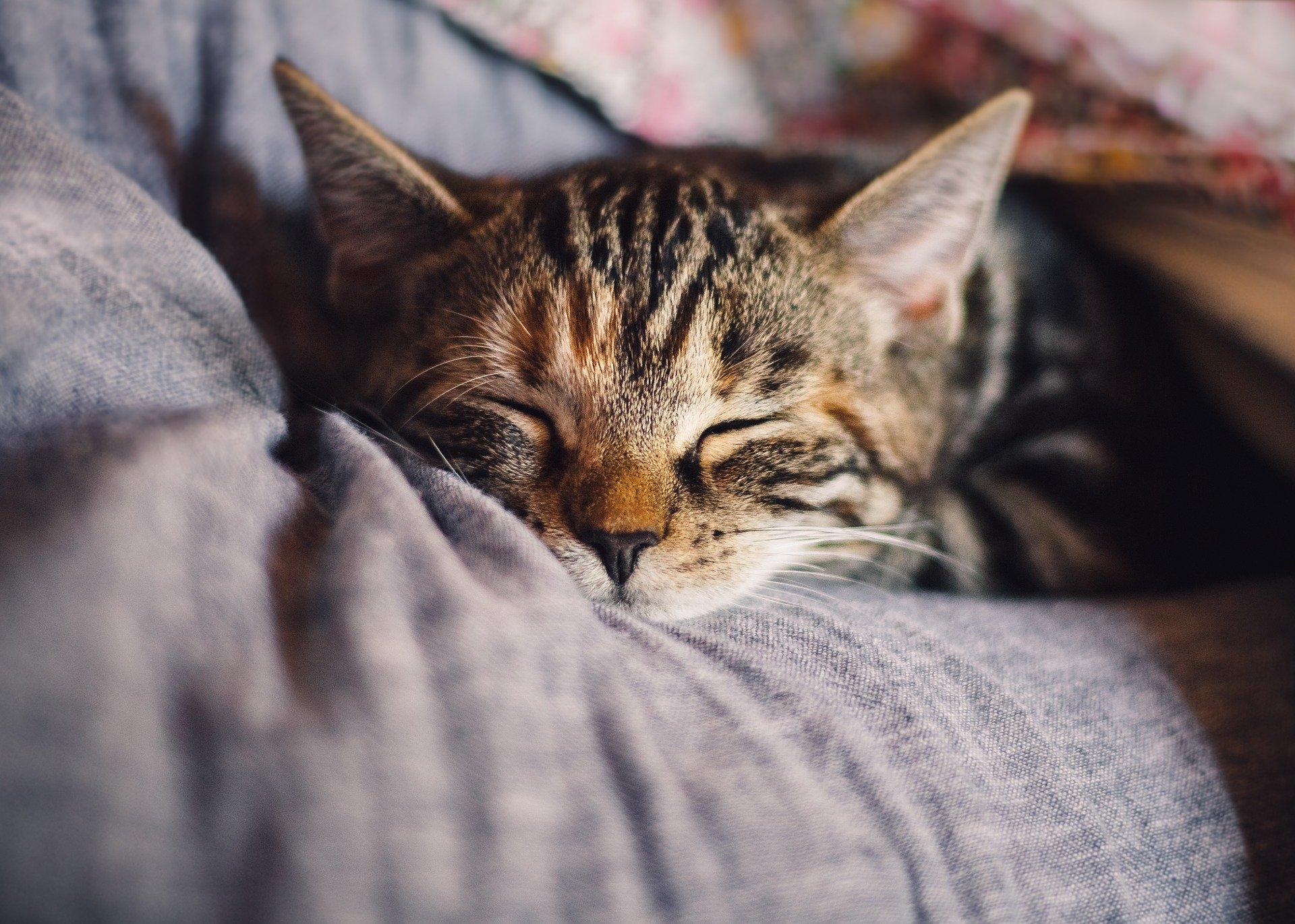 come capire se il gatto ha fame segnali del gatto